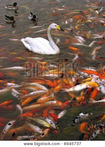 Fishy lake