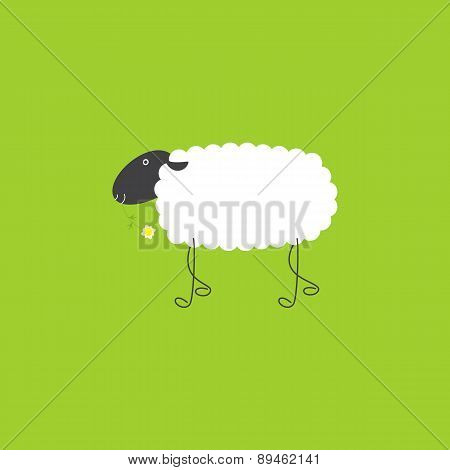 Sheep With Chamomile