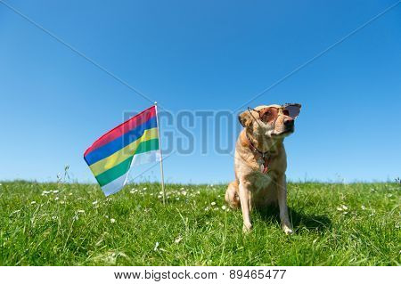 Dog with sunglasses and Dutch flag at wadden island Terschelling