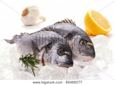 Couple Of Fresh Gilthead, Lemon, Rosemary On Ice