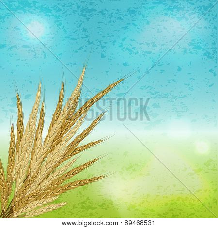 Agriculture. Ears Of Mature Rye Wheat Against The Sky. Vector Illustration Background