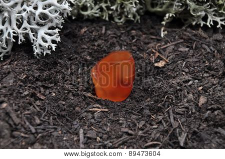 Carnelian On Forest Floor