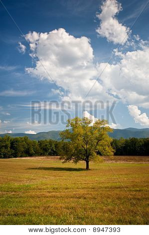 Lonely Oak Tree In Cades Cove Hay Field