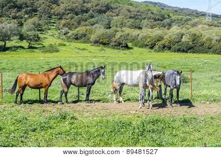Herd Of Horses In A Meadow