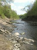 pic of wilder  - river in wilderness in spring with green trees on its bank - JPG