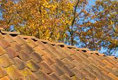 pic of red roof tile  - weathered roof tiles in an autumn settings - JPG