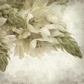 pic of bethlehem  - textured old paper background with start of bethlehem flowers - JPG