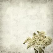 picture of bethlehem star  - textured old paper background with start of bethlehem flowers - JPG