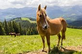 foto of bay horse  - Bay horse on a mountain pasture against mountains - JPG