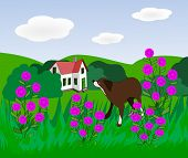 stock photo of dog-house  - A brown dog in a meadow with pink flowers and a house in the background - JPG