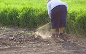 stock photo of hoe  - Senior woman hoeing vegetable garden in springtime - JPG