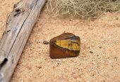 pic of tigers-eye  - Colorful and crisp image of tigers eye - JPG