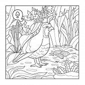 foto of quail  - Coloring book  - JPG