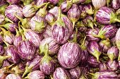 picture of brinjal  - close up of Eggplant Brinjal Vegetable Background - JPG