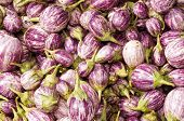 stock photo of brinjal  - close up of Eggplant Brinjal Vegetable Background - JPG