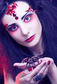picture of black widow spider  - Black widow - JPG