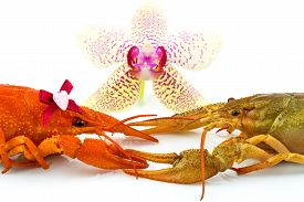 foto of crawdads  - Couple of crayfishes with orchid isolated on white background - JPG