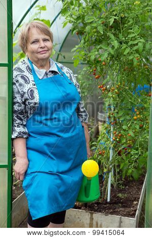 Senior pensioner woman wearing apron with watering can in greenhouse