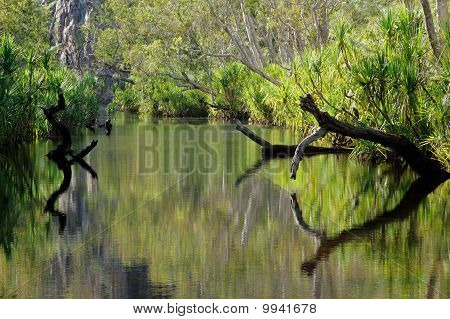 Trees with Reflections, Nitmiluk
