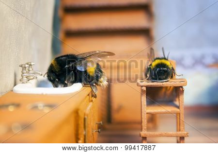 Scenes From The Life Of Bumblebee Family.