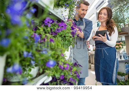Male florist looking at female colleague using tablet computer in flower shop