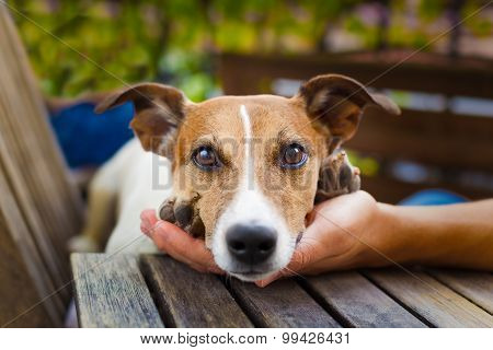 Owner Petting Dog