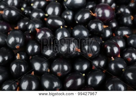 Heap of wild black currant close up
