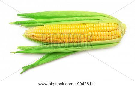 Fresh corn on cob isolated on white