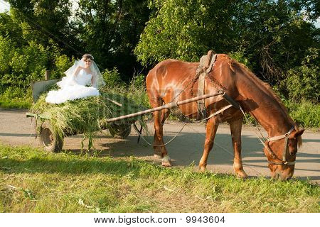 Bride In The Old Carriage