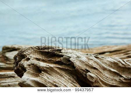 Twisted Driftwood With Lake Superior Background