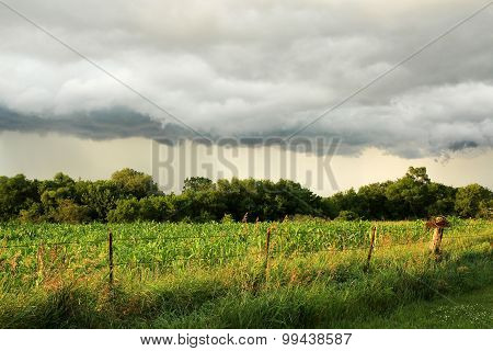 Arcus Shelf Storm Cloud Over Midwest American Corn Field