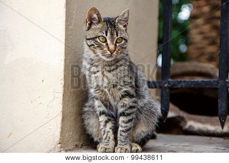 Feral cat in Athens, Greece