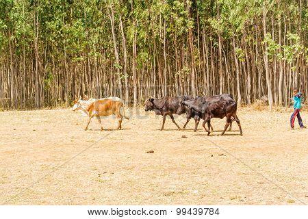 Farmland  In Ethiopia