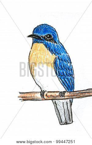 Blue-throated Flycatcher Bird Drawing
