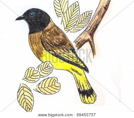 Black-headed Bulbul Bird Drawing