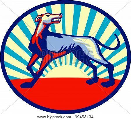Greyhound Dog Angry Looking Up Circle Retro