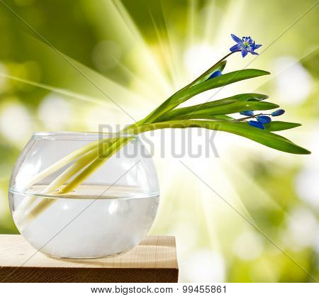 Image Of Snowdrop In A Vase On A Wooden Table