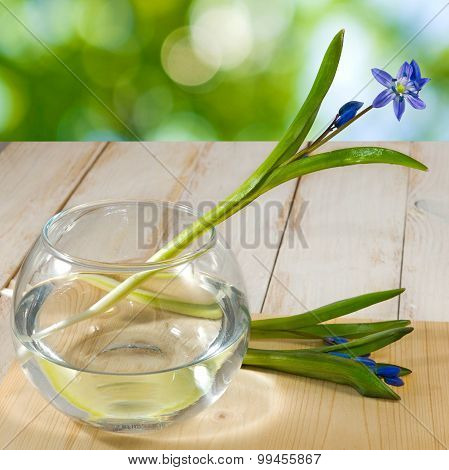 Image Of Snowdrop In A Vase