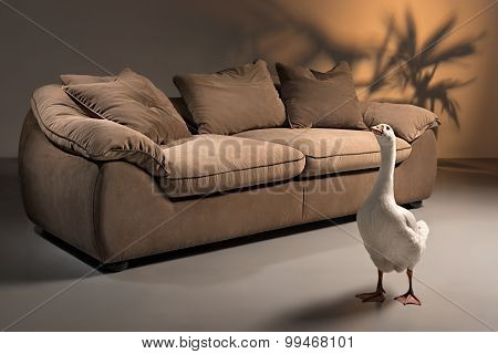 A shoot of brown sofa made of goose down with pillows on a dark background