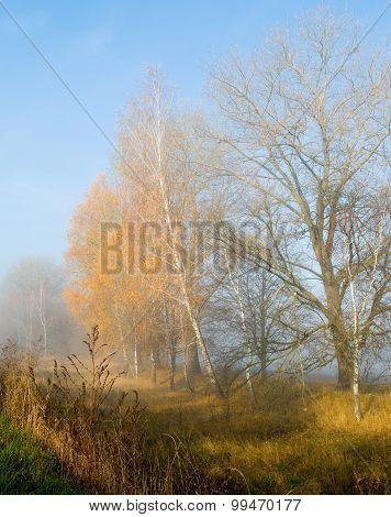 Autumn Gold In Fog