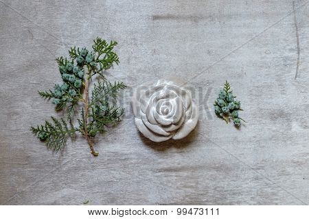 Rock Rose And Sprig Of Arborvitae On Gray  Background
