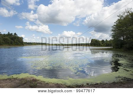 Turner Pond Landscape