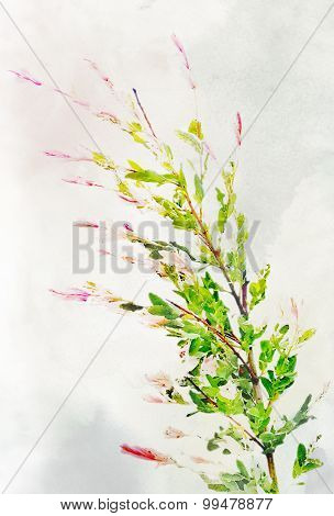 Watercolored Variegated Willow