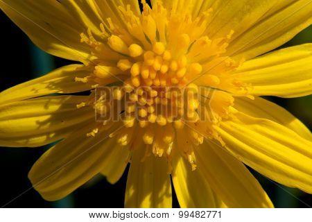 Centro de uma flor