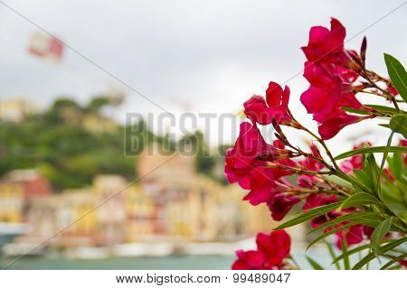 Red  flowers .Summer background.