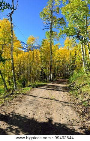 Road Through The Forest Of Yellow Aspen During The Foliage Season
