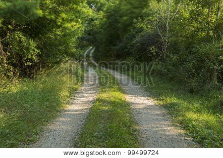 Breezy Road In Woods