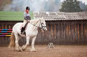 image of shire horse  - Young woman riding shire horse in arena - JPG