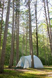 foto of primite  - A little blue tent is primitive camping in a Pine Tree Forest in the woods in Northern Wisconsin nature - JPG