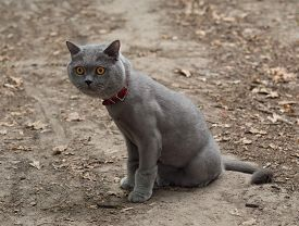 stock photo of castration  - Cat on a walk in the park